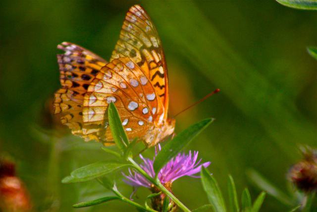 photograph of orange butterfly